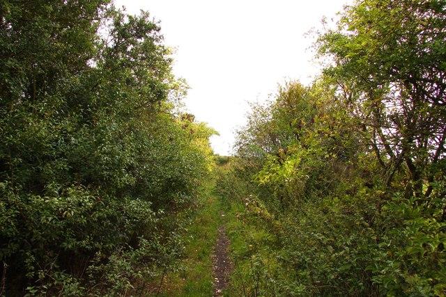 Bridleway to Ardington Wick
