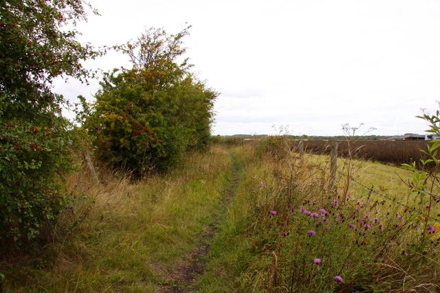 Bridleway past the fields
