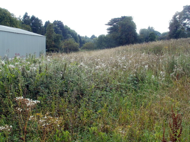 Field of weeds, Nantgavenny Lane, Mardy