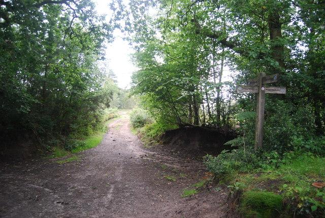 Bridleway crossroads, Black Down