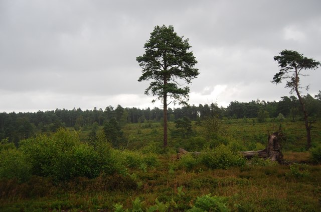 Heathland and woodland on Black Down