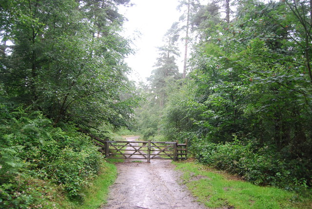 Gate on the path, Black Down