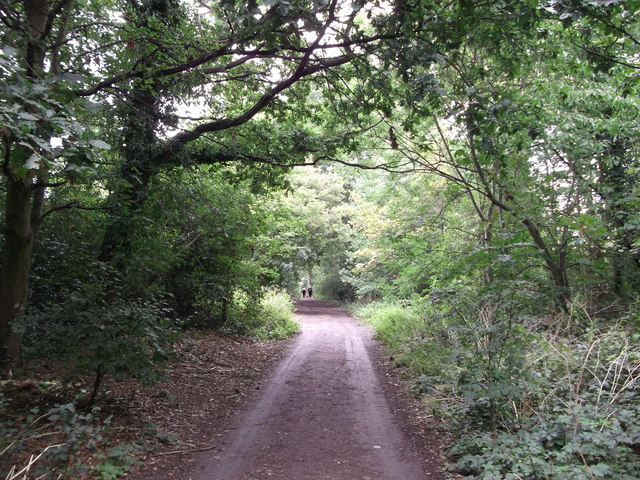 Track in Pickhurst Green Wood