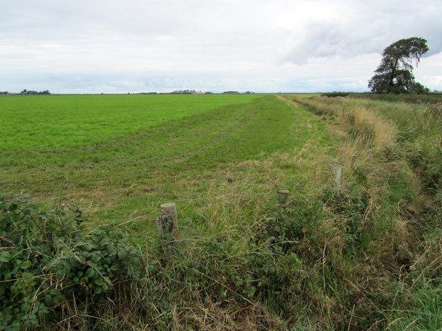 Farmland on Cockerham Moss