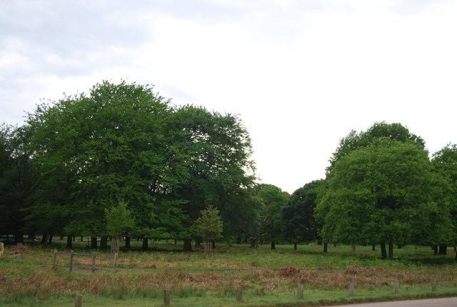 Woodland, Richmond Park