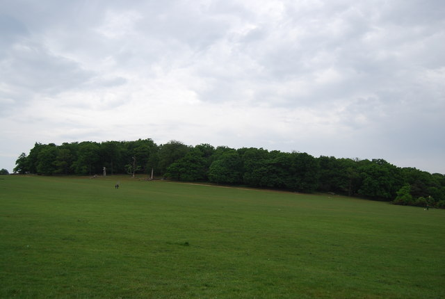 Spankers Hill Wood, Richmond Park