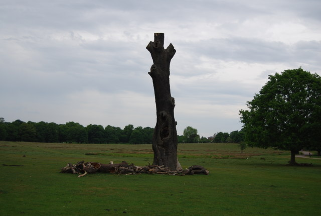 Dead tree, Richmond Park