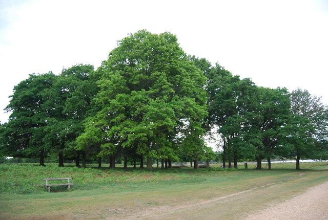 Trees, Richmond Park