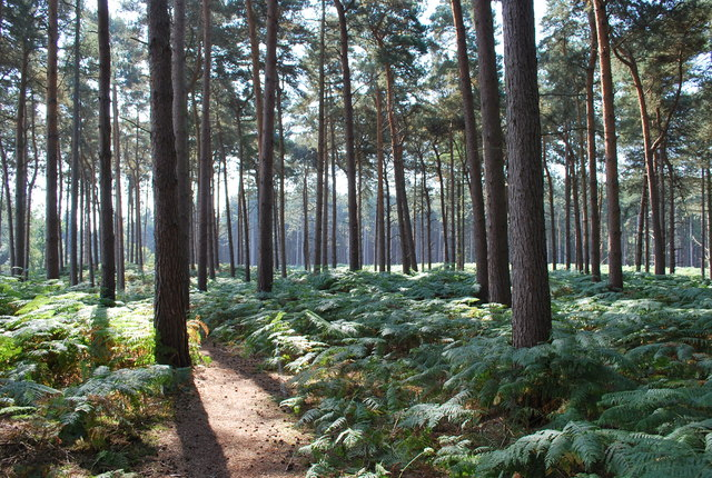 Rowney Warren Woods Near Chicksands
