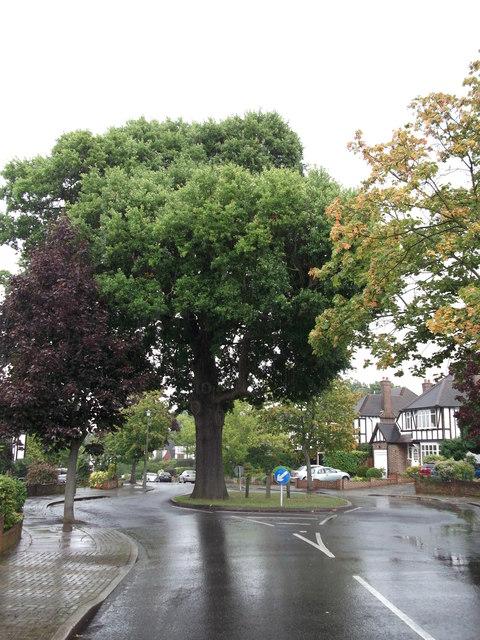 Oak on Broad Oaks Way
