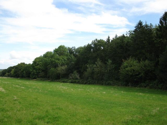 Woodland edge at Seward's Gully