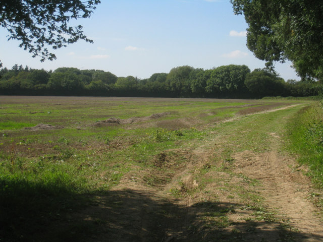 View of Wootton Copse