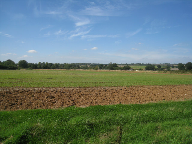 Fields by Wootton Copse