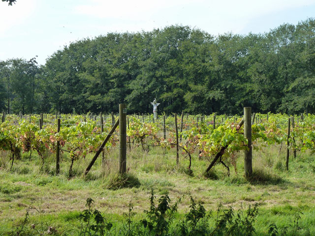 Scarecrow in the vineyard