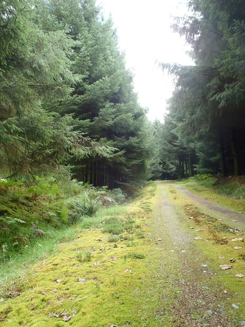 Track in Corse and Craig Forest