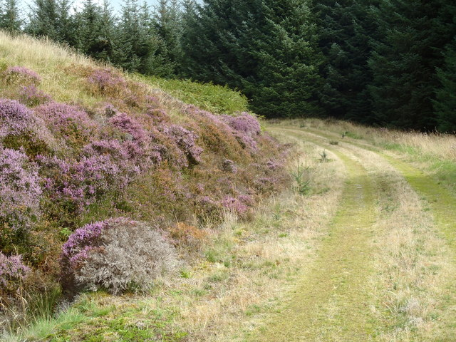 Heather banking in Corse and Craig Forest
