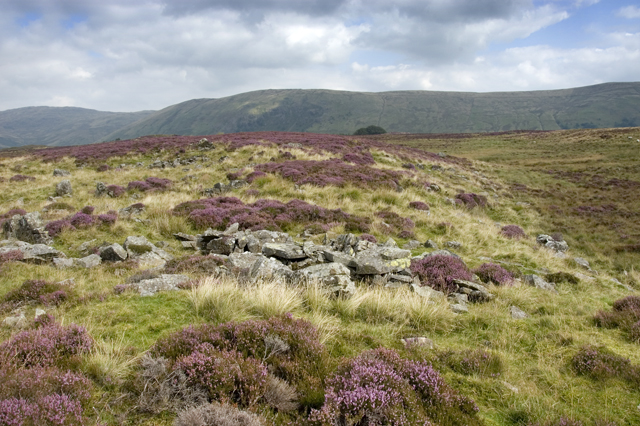 Heather Moorland, Sleddale Forest
