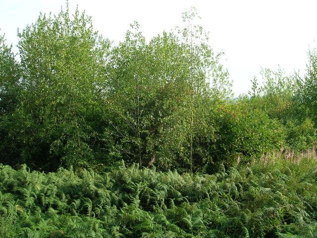 Trees beside path, Corker Bottoms