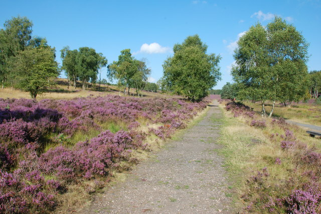 Brindley Valley, Cannock Chase