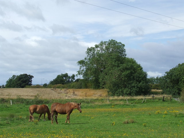 Horses near West Rainton