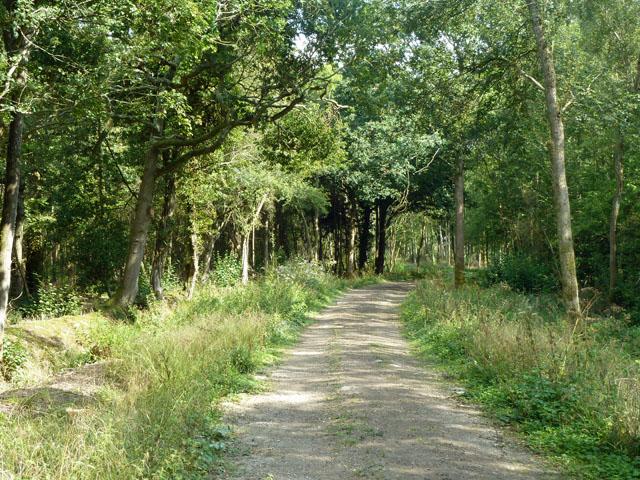 Bridleway through Ravenswood