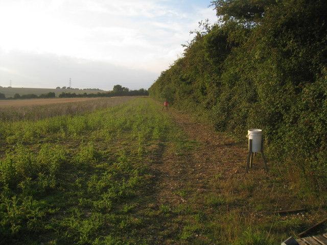 Field margin scene - Hannington