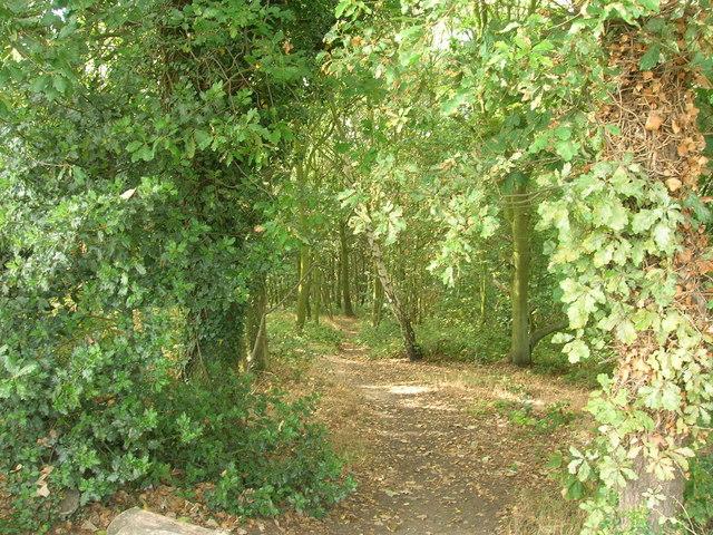 Path in Treeton Wood