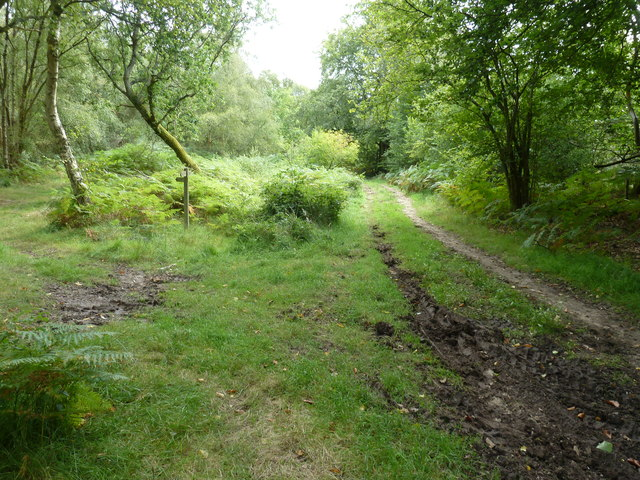 Bridleway and footpath junction on the edge of Stedham Marsh
