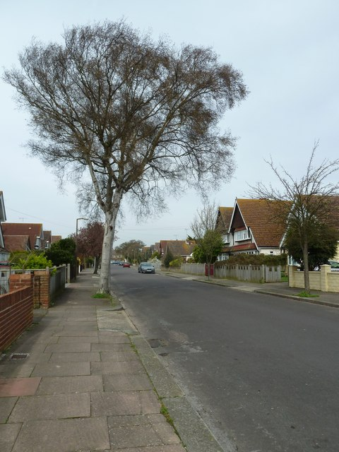 Mid section of Nutbourne Avenue