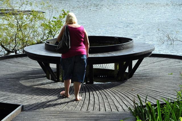 Pond Dipping Platform