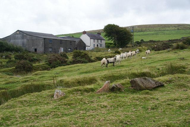 Sheep by Ffynnondici
