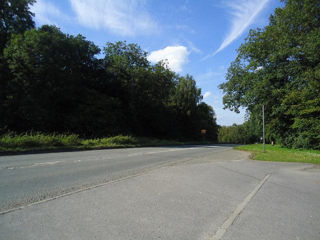 Shere Road, Newlands Corner