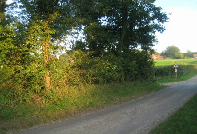 Lane junction - Ashe Warren