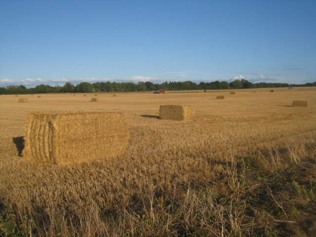 Harvest time - Pardown
