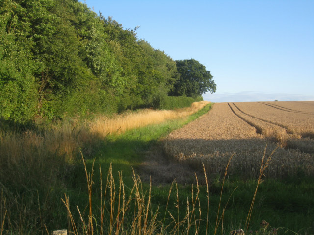 Field by Bull's Bushes Copse