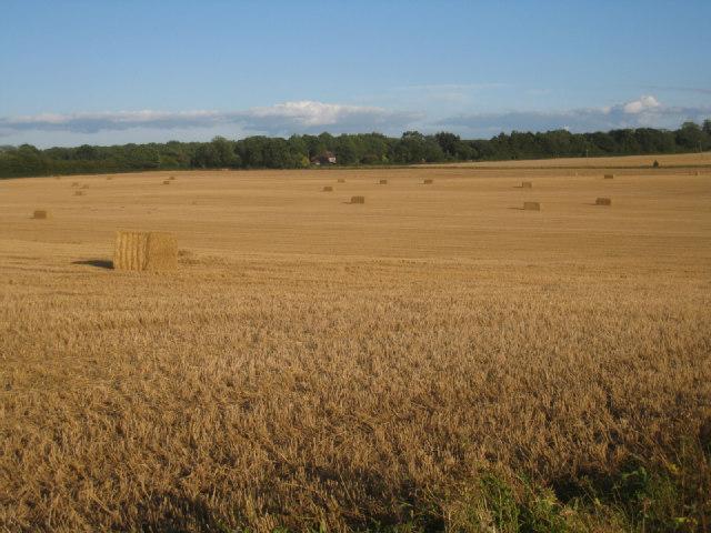 Harvested field - Pardown