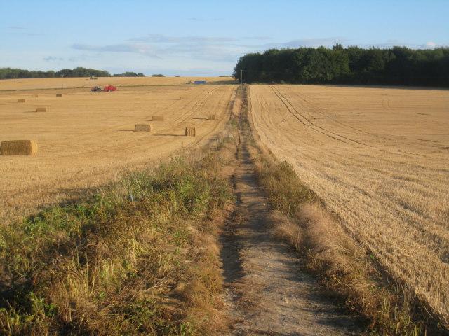 Path between fields