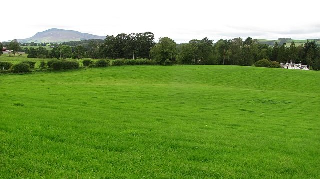 Grassland, Knowehead
