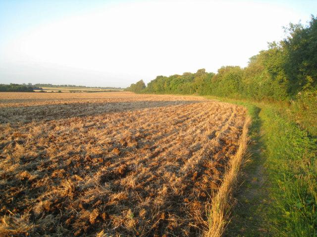 Farmland east of Oakley