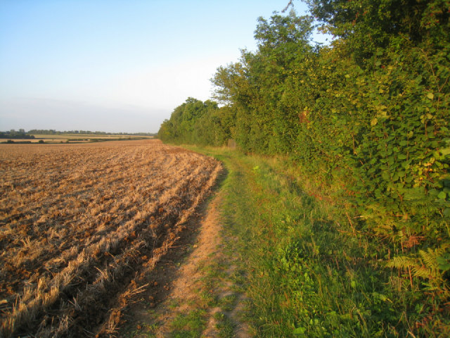 Path along the field