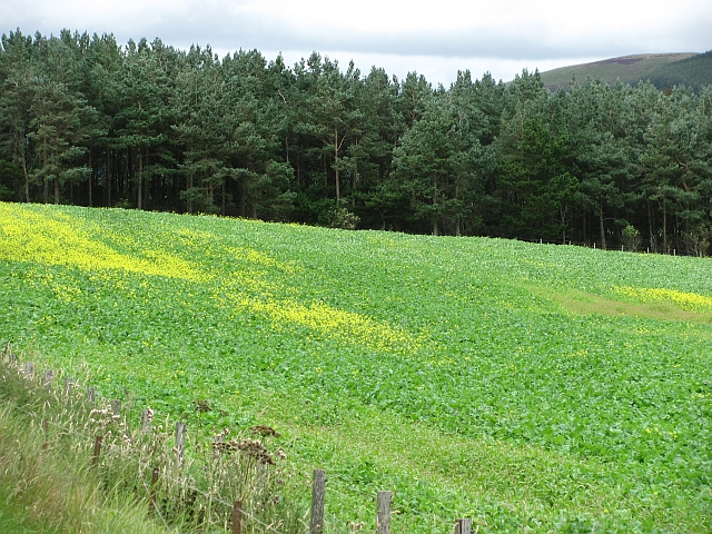 Turnip field, Unthank