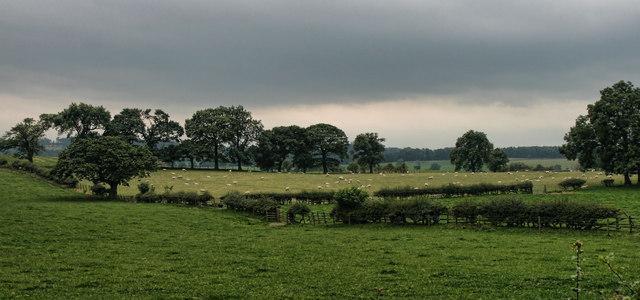 Staindrop Moor