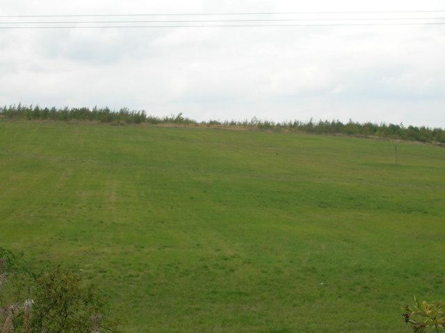 Farmland near Sunnyside