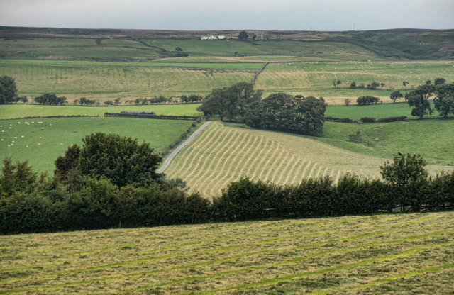 Sadler Lane