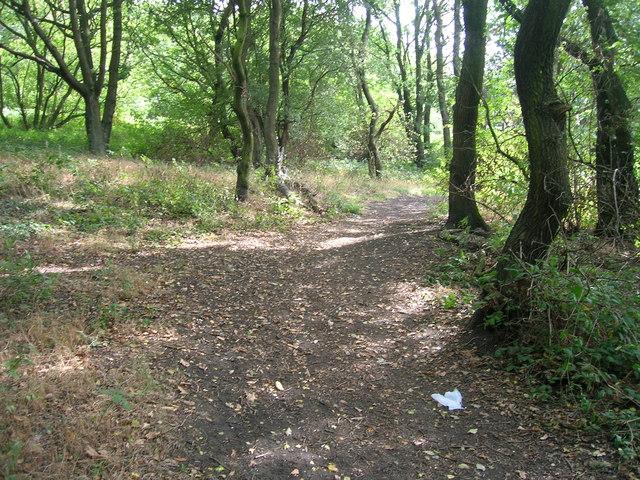 Path in Gulling Wood