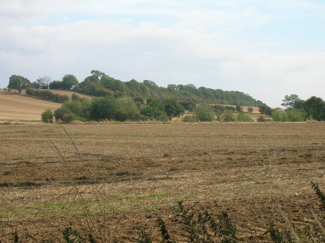 Farmland off Hellaby Lane