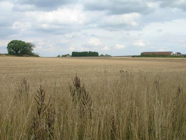 Farmland off Carr Lane