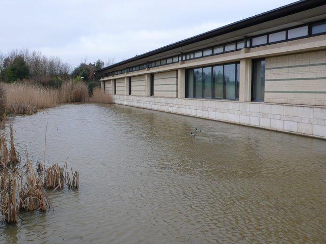 Network Rail Duck Pond