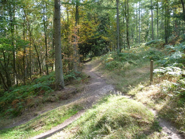 Mountain bike trail in Eastridge Wood