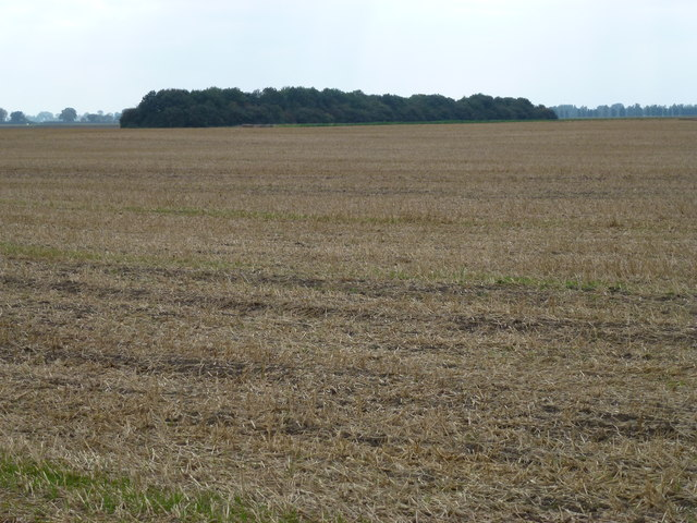 Stubble field west of New Cut near Thorney